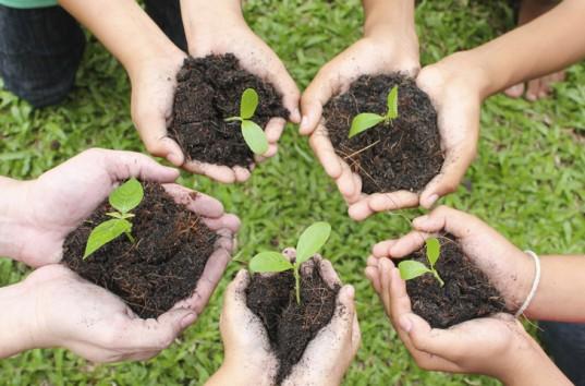 Hands seedlings